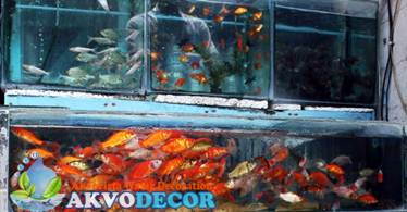 Aquarium Air Tawar