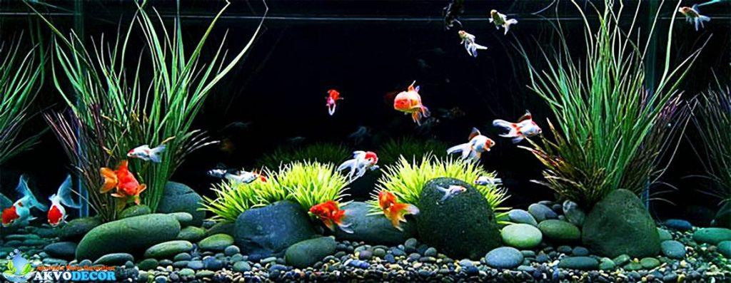 Selain karena aspek geografis & hobi , aquarium air tawar juga