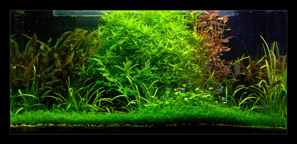 Aquascape : Definisi dan Design