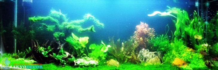 Aquarium air tawar (Akvodecor.com)