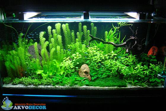 Aquascape-Aquarium Tanpa Pengurasan?