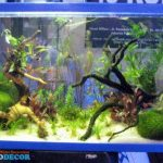 Aquascape Atau Aquarium Air Laut ?