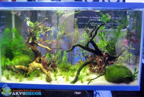 Aquascape Atau Aquarium Air Laut ?