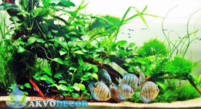Aquascape dan Discus | Jual Aquascape Bekasi