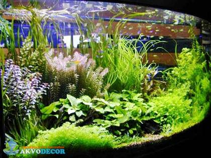 Keunggulan Aquascape Dibanding Aquarium Konvensional