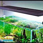 Peralatan Aquascape | Bagian 2