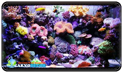 Akuarium Air Laut Bisnis yang Cukup Menjanjikan,Aquarium Air Laut,Jual Aquarium Air Laut di Jakarta,Perawatan Aquarium Air Laut,Jual Aquarium Air Laut Tangerang
