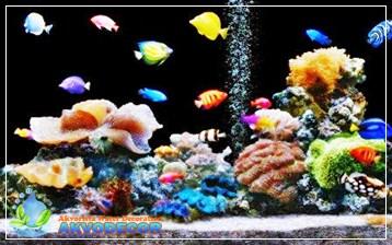 Aquarium Air Laut Sebagai Miniaturnya Laut