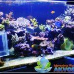 Aquarium Air Laut Sebagai Obat Relaksasi