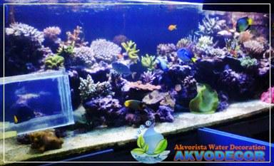 Aquarium Air Laut,Konsultasi Aquascape,Pemesanan Aquascape,Jual Peralatan Aquascape,