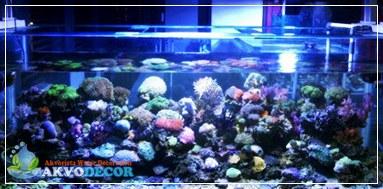 Aquarium Air Laut Sebagai Obat Stres dan Bosan