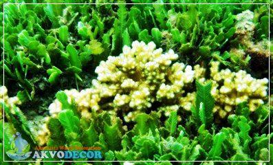 Berbagai Jenis Biota dan Tumbuhan Laut Dalam Akuarium Air Laut