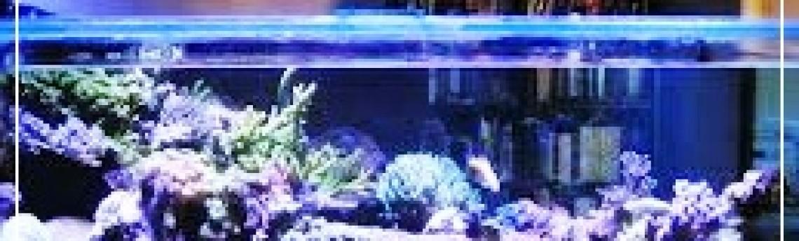 Berbagai Manfaat Aquarium Air Laut