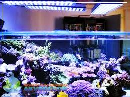 Berbagai Manfaat Aquarium Air Laut,Jual Perlengkapan Aquarium,Jual Peralatan Aquarium,Jual Tanaman Air