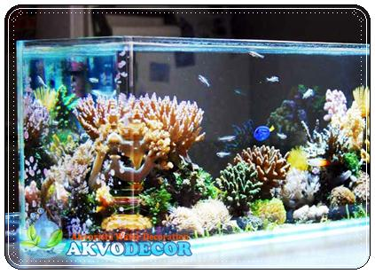 Memilih Air Laut Untuk Aquarium Air Laut,Air Laut Untuk Aquarium Air Laut,Aquarium Air Laut,Jual Aquarium Air Tawar