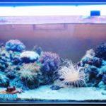 Hal yang Perlu Dihindari  Untuk Hobi Aquarium Air Laut