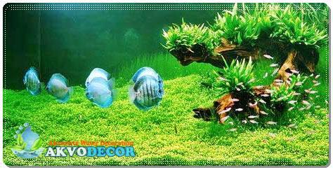 Hal yang Perlu Diperhatikan Dalam Perawatan Aquarium Air Laut