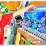 Dari Hobi Aquarium Air Laut Menjadi Sumber Rezeki