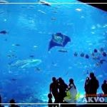 Georgia Aquarium Induk Aquarium Air Laut