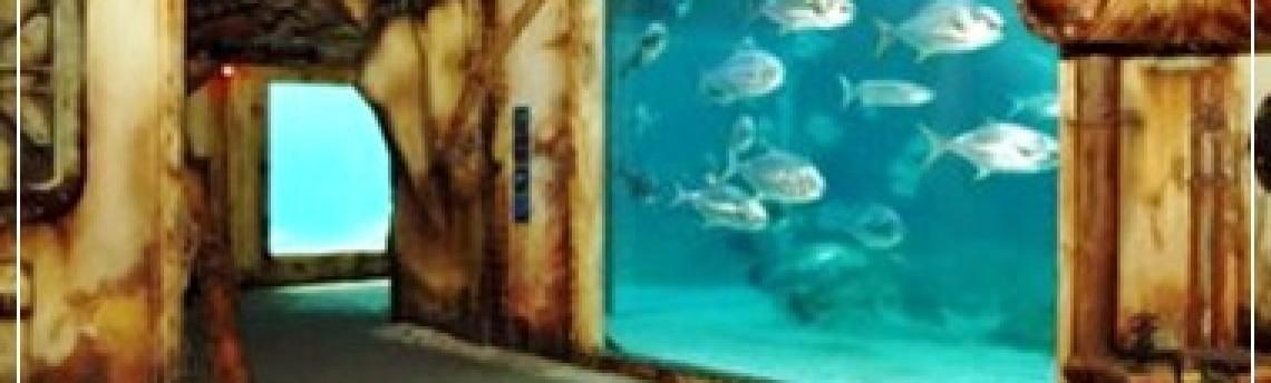 Keindahan Akuarium Air Laut Di Berbagai Belahan Dunia