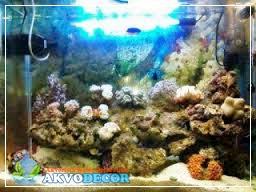 Langkah-Langkah Membuat Akuarium Air Laut Yang Baik | Jual Aquarium Murah