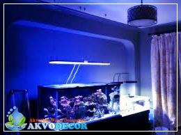 Memahami Lebih Dekat Koral Laut Dalam Aquarium Air Laut | Jual Aquarium Air Laut | Aquarium Murah di Jakarta