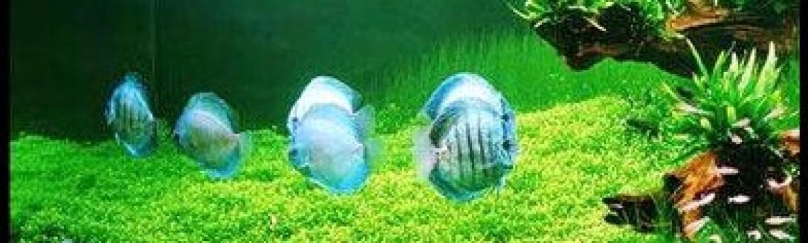 Mengenal Lebih Dekat Tentang  Aquarium Air Laut