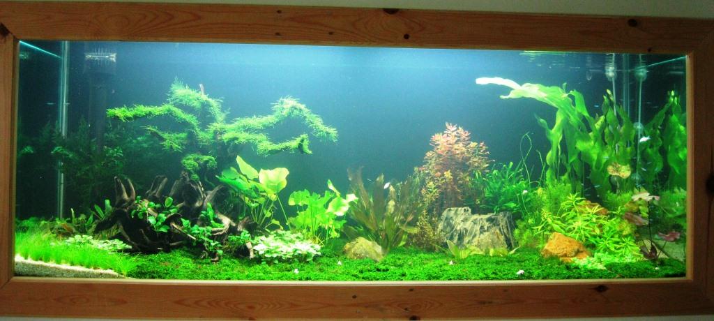 Merawat Tanaman Aquascape