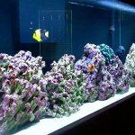 Pencahayaan dalam Aquarium air laut FOWLR (fish only with live rock)