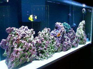 aquarium air laut FOWLR