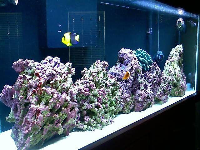 Pencahayaan dalam Aquarium air laut FOWLR (fish only with live rock)
