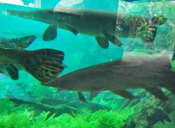 Aquarium Air Tawar di Bali