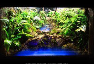 aquarium dekorasi paludarium