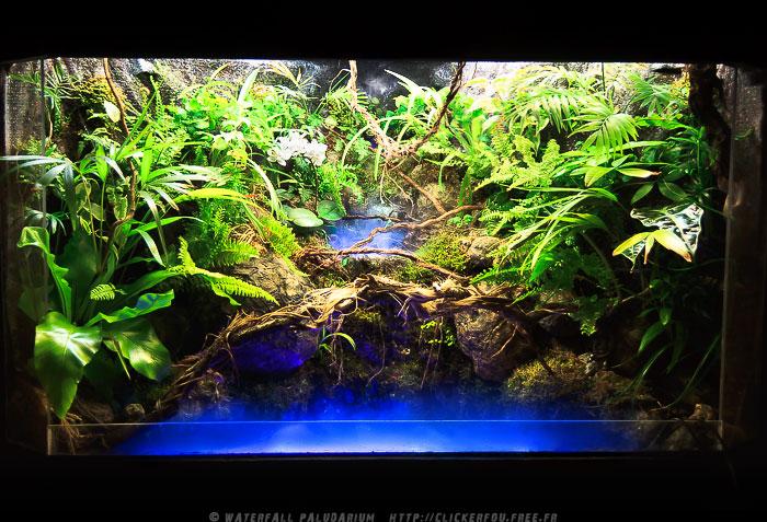Kreasi Dekorasi Aquarium Aquascape
