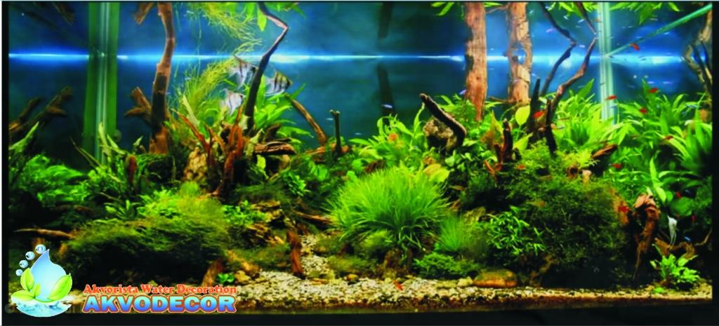 Manfaat Dekorasi Aquarium Dinding