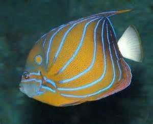 Memilih Ikan Hias Aquarium Laut