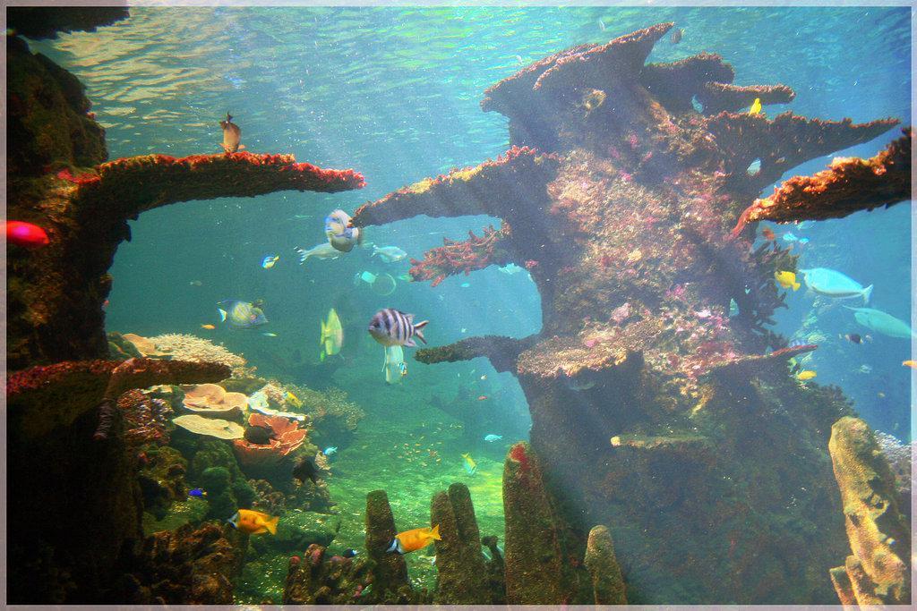 aquarium air tawar bali