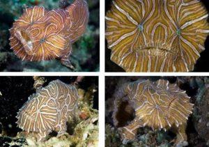 Koleksi Ikan Hias Air Laut Karnivora