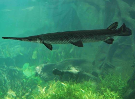 wisata aquarium tawar bali