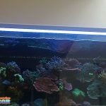 Peralatan Aquarium Air Laut