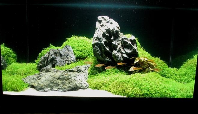 Aquascape bali - Gambar aquascape ...