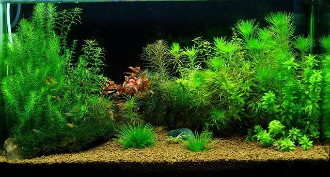 Pin Aquascape-aquarium-air-tawar-ajilbabcom-portal on