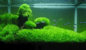 aquascape the best
