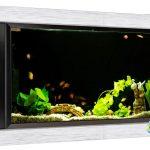 Tempat Jual Aquarium Air Laut di BSD