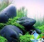 Jual Aquascape di Bogor