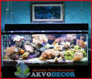 Tempat Jual Perlengkapan Aquarium Air Laut di Jakarta