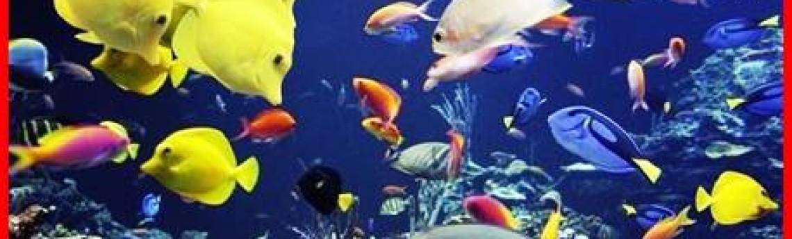 Jasa Perawatan Aquarium Air Laut di Jakarta