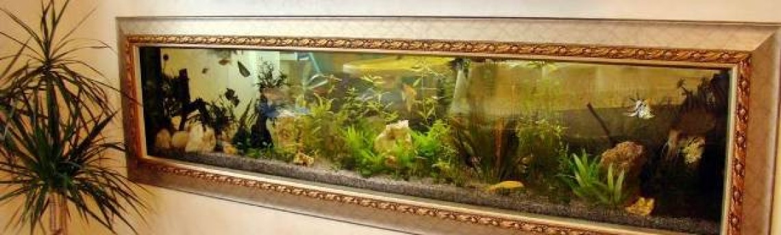 Toko Aquarium Hias Air Laut Online di Tangerang