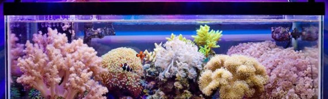 Pembuat Aquarium Air Laut di Daerah Jakarta
