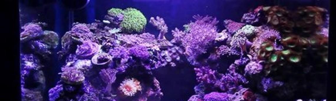 Pembuat Aquarium Air Laut di Daerah Tangerang